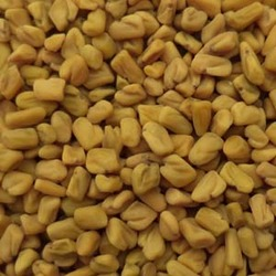 Fenugreek Seeds 100% Sortexed