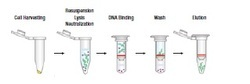 Ultra Pure Plasmid DNA Extraction Kit