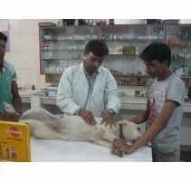 Dog Surgery Service