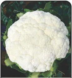 Agehni Cauliflower Seed, Packaging: Plastic Bag or Polythene Bag