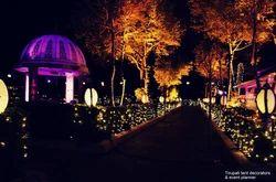 Light Decoration