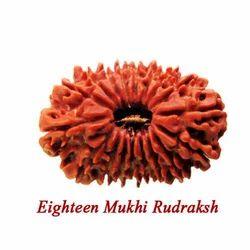 Eighteen Mukhi Rudraksha
