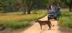 Kanha National Park Tour