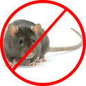 Rodent Control Service