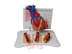 Pulmonary Arterial Hypertension Anatomical Model