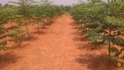Agri Farm land Buy& sell