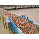 Egg Cross Conveyor