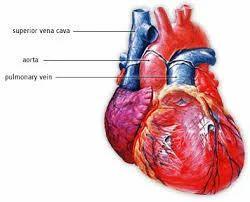 Cardiac & Thoracic Surgery