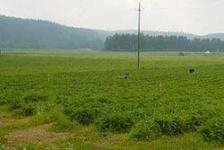 Land Property