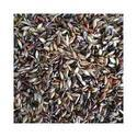Sudan Grass Seed