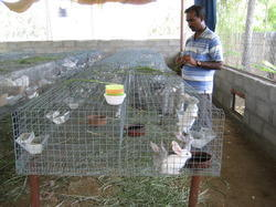 is rabbit farming legal in india