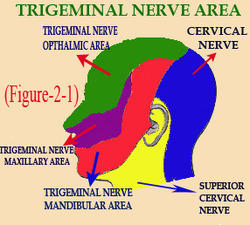 Headache Tumor Treatment, Medical Treatment Services - Hameo
