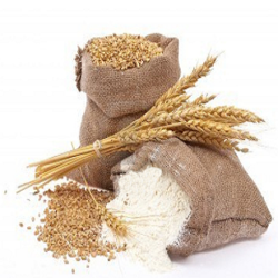 Processed Wheat Flour, प्रोसेस्ड व्हीट फ़्लावर | Debu