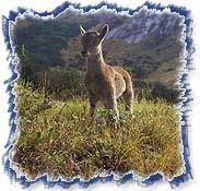 印度野生动物旅游