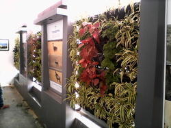 Living Green Wall Services