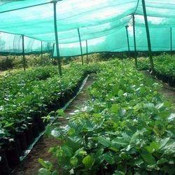 HDPE Green Farm Shed Net, Length: 55 meter