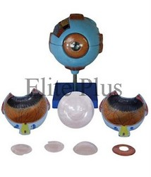 Giant Eye Models