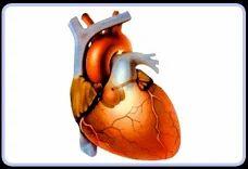 Cardiology Hospitals