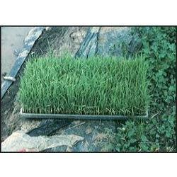 Paddy Transplantation Trays