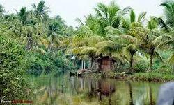 The Backwaters Magic
