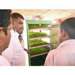 Training in hydroponics for farmers