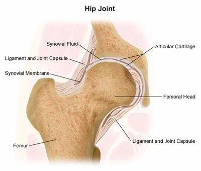 Anatomy Of Hip Replacement In Mumbai Id 6268680312