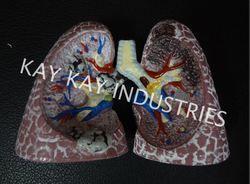 Fiber Lungs Model