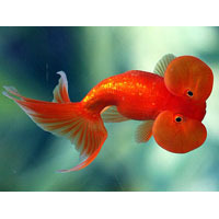 Aquarium Fish Products Aquarium Fish Manufacturer From Howrah
