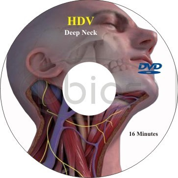 Anatomy Videos At Rs 1000 Piece Medical Chart Id 8945136512