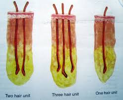 Hair Loss Treatment for Men & Women
