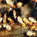 Anti Termite Treatment Services