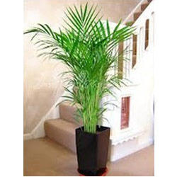 Plants Rental Services In India