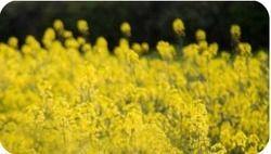 Biofuel & Bioproducts