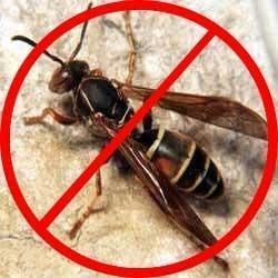 Paper Wasp Control Service