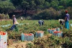 Image result for Harvesting Management