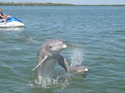 Dolphin Show Package Tours Service