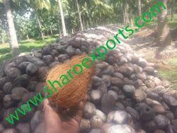 Matured Semi Husked Coconuts