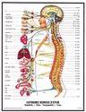 Nervous Diseases Treatments