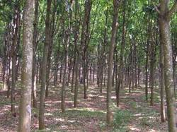Tree Seeds for Afforestation