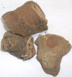 Bahman Lal,Rad Behman,Salvia Haematodes