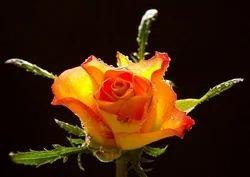 Pristi Flower