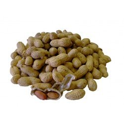 Ground Nut