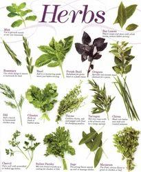 Natural Herbs in Neemuch, Madhya Pradesh, India - IndiaMART