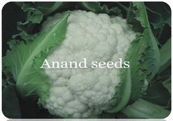 Aman Deep Vegetable Seeds