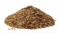 Line Seed