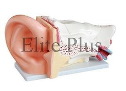 Ear Model New Style Giant Models