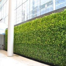 Vertical Green Wall, Landscaping Accessories - Greenscape ...