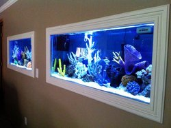 Freshwater Aquarium In Kolkata Latest Price Amp Mandi
