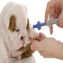 Anti Rabies Injection