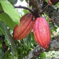 Fruit Trees Le Other From